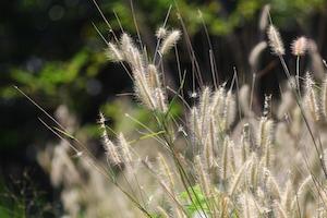 Vildvuxet gräs